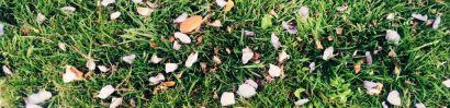 petale