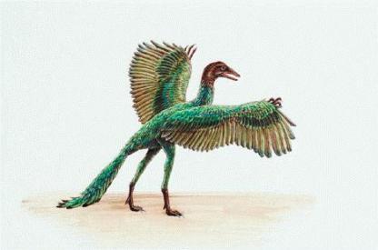 focus_archaeopteryx.jpg