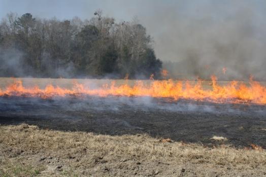 Burning-Hayfield.jpg