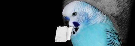 bilete-de-papagal-1
