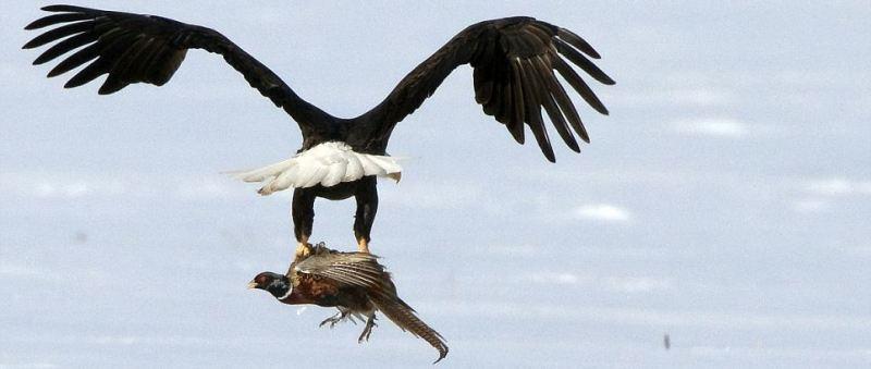 vultur.jpg